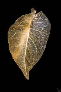 That's no special critter, that's just a leaf...drifting ... by Rico Besserdich 